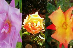 گل هدیه ایست كه اگر به صورت غیر منتظره تقدیم شود ارزش بیشتری دارد. هر گلی بویی دارد و مفهوم و معنی خاص ؛ با تقدیم گلها به دوست و آشنا ، همراه زیبایی و رایحه خوش گلها ، پیامی برگرفته از معانی آنها نیز تقدیم میشود گرچه شاید کمتر به آن توجه میشود . معنی تعداد شاخه گلها بصورت كلی در یك دسته 1 شاخه گل نشانه توجه یك فرد به طرف مقابل 3 شاخه گل نشانه احترام به طرف مقابل 5 شاخه گل نشانه علاقه و محبت به طرف مقابل 7 شاخه گل نشانه عشق