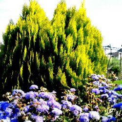 باغ گلها _مشهد
