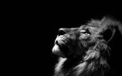 یک حقیقت تلخ همیشه بودن کسانی که می گفتند از چی بیشتر می ترسید  و من با غرور همیشه می خواستم  که همیشه بگویم از هیچکس! ولی با صدای لرزان می گویم، از خدا!!! که نکند مرا به فراموشی بسپارد. خدایا عاشقتم:-*