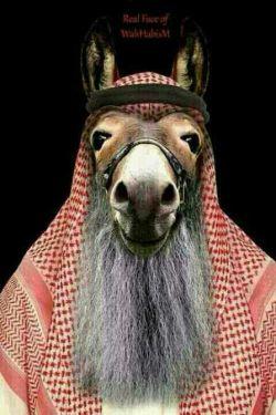 عرب دیوث -__-