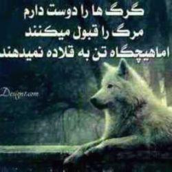 گرگ باش مغرور برشب پادشاهی کن میخوای خنجر بزنی از رو بزن   مثل گرگ تعصب داشته باش مثل گرگ حتی به شیر هم رحم نکن مثل گرگ رو در رو حق بگیر  به مانند گرگ باش دوستانت را لیس بزن دشمنانت گاز بگیر گرگ باش دشمن را بدر در برابر سگهای ولگرد بی می باش آنها با پارس کردن ها زنده اند گرگ باش بی اعتماد باش بی اعتنا همیشه باگله اما تنها...