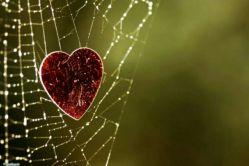 وقتی پروانه در تاری بیفتد که  عنکبوتش سیر باشــــــــــــــد  تازه قصه آغاز شده اســــــت  دیگر نه می تواند پرواز کند و نه بمیرد  این قصه ی عشــق اســـــــــــــــت ...