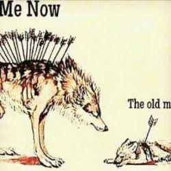گرگ بیرحم نبود ...گرگ رام بود و عاشق...!!! خیانت دید ب کسی رحم نکرد گله خود را نابود کرد تمام گرگها را کشت فقط چند بچه گرگ را نگهداشت انها را ب بیرحمی و خونخواری عادت داد..... شیر به گرگ گفت تو رام بودی چه شد ک اینچنین بیرحم گشتی؟؟ گرگ پاسخ داد رحم نکردند پس رحم نمیکنم...... کسی غرور گرگ را درک نکرد... مردم عاشق سگهایی هستند که به... پایشان می افتند و دم تکان می دهند..!!!!! قبول شیرها قویترند.... اما  هیچ  گرگی  با  شلاق  اهالی  سیرک  دلقک  نمیشود....