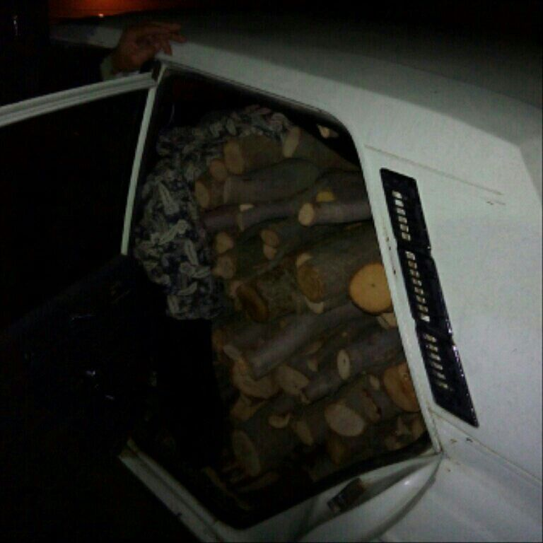 باید به اینها که قاچاق چوب میکنند چه گفت