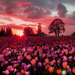 این باق گل تقدیم به دوستان گلم.شما هم دوستانتون رو تگ کنید.یه لایکم بکنی بد نیس!!!