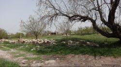 طبیعتی از روستای ورجوی مراغه