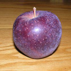 سیب توسرخ استار،#نهالستان پارس#ایران درخت