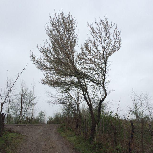 طبیعت روستای كركان