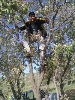 من در کوه الان یهویی بالای درخت.........