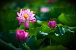 زندگیتان به زیبایی این طبیعت و گلها