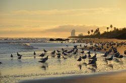 عکاس : نیلوفر قادر مکان : ساحل دریای کاسپین