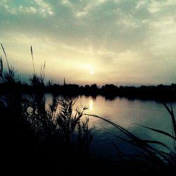 ,اروند