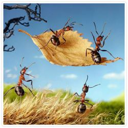 مورچه و دانشمندان خیالی که مسلمان شدند(کامنت اول )