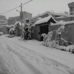 شیراز برفی