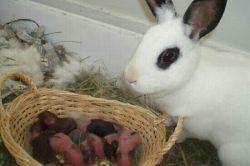 خرگوش با بچاهش