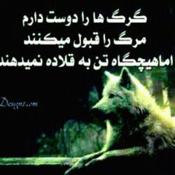 به گرگ بودنم میبالم چون: گرگها حق ندارن دل رحم باشن! گرگها حق ندادن عاشق بشن!!! گرگها حق ندارن دل به کسی ببندن! گرگها حق ندادن به کسی اعتماد کنن!!! گرگها حق ندارن با جفت چشماشون بخوابن حتی وقتی که پیش هم هستن! گرگها حق خیلی کارها رو ندارن ♚  پس اگر میخوای گرگ باشی قبل از اطمینان خوب بشین  یه بار دیگه فکر کن چون بعد گرگ شدن راه برگشتی نداری و تنها راه برگشت توبست و توبه یه گرگ هم مرگه ☜گرگ یعنی تنهایی ☜تنهایی گرگ هم یعنی سلطنت و اختیار تام یک گرگ بر خودش