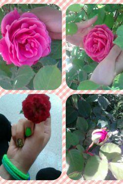 گلهای حیاط دانشگامون :-) تقدیم ب همه دوسای لنزوریم مخصوصا مهری و سآروووو جون ونگاری