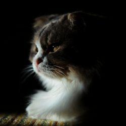 CAT SMAAAAAL