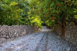 ایذه /باغ های انار روستای شیوند