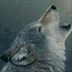 گرگ های این زمانه ب کویر میگریزند...چاره ای نیست!!!عصر عصرپادشاهی خرگوش هاست