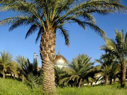 باغ امامزاده علی الصالح (ع)