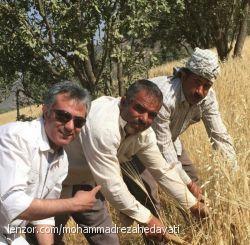 کشاورزای نازنین خوزستانی ،که اگر نباشند نانی هم برای ما نیست