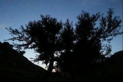 شب گلین ثبت شده با گوشی