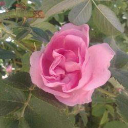 گل واسه بچهای گل لنزور ....که اینقدر گلن