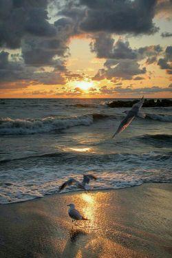 دلم دل از هوس یار بر نمی گیرد .... طریق مردم هشیار برنمی گیرد