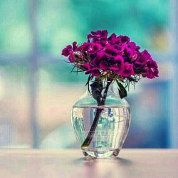 بهترین دوست خداست! او آنقدر خوب است که اگر یک گل به او تقدیم کنید، دسته گلی تقدیمتان میکند.. و خوب تر از آن است که اگر دسته گلی به آب دادیم، دسته گل هایش را پس بگیرد..