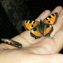 آروم ترین و زیباترین پروانه هایی که دیدم