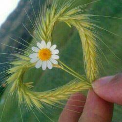 سلام به بهترین های زندگیم ..سلامی پر از عشق وزیبایی!!!!وآرزوی سلامتی برای همه دوستان لنزرویم...بوس...همه تون رو دوستدارم شدید