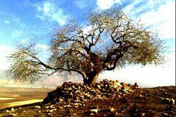 زیارتگاهی درصادق آباد