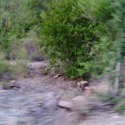 این عکس فلووفوکوس خودم گرفتم درحال حرکت