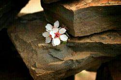 خدایـــــــــــــــا  فانوست را کمی پایین تر بگیر جاده ای که در آن قدم نهاده ام تاریک است، انتهایش را نمی دانم چیست. میترسم انتهایش بن بست باشد  تو را به مهربانیت سوگند، فانوست را کمی پایین تر بگیر تا روشنی بخش راه نامشخصم باشد. نمی خواهم بی فانوس تو به جایی برسم که برگشتنم دشوار گردد و پشیمان شوم.  ای مهربانترینم ، من اکنون سخت به نور فانوست محتاجم