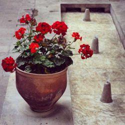 باغ ایرانی تهران، خ ملاصدرا، انتهای خ شیخ بهایی @tehranpics @tehranphoto #tehran #tehranpic  #tehranpics #tehrangram