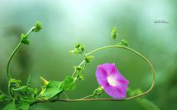 25 خرداد روز گل و گیاه بر دوستداران طبیعت مبارک باد .