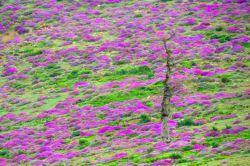 شاهرود ارتفاعات جنگل اولنگ