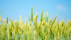 هفته جهاد کشاورزی بر تمامی کشاورزان سرافراز این مرز و بوم مبارک باد .