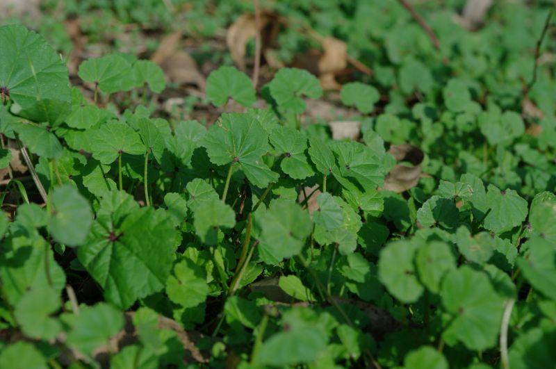 (تولیه)یه نوع گیاه که خیلی خوشمزس باید با اب پختش ........