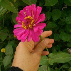 گل های باغچه منه تقدیم به همه شما