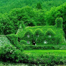 خانه ای پوشیده شده با پیچک