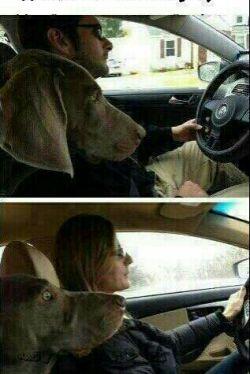 تفاوت رانندگی مردها و زنها به قیافه سگه دقت کنید