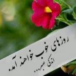 mohsen_hamed