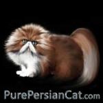 purepersiancat
