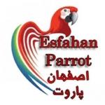 esfahanparrot