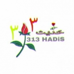 313_hds