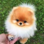 Dogshop_esf64